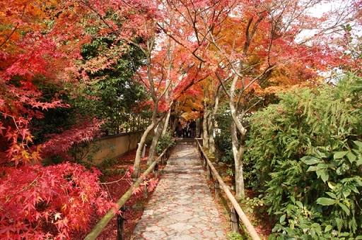 kyotokouyo1.jpg