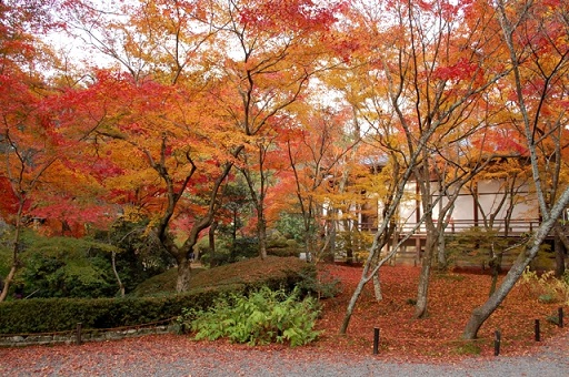 kyotokouyo11.jpg