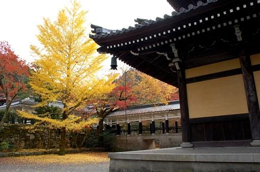 南禅寺のイチョウの木