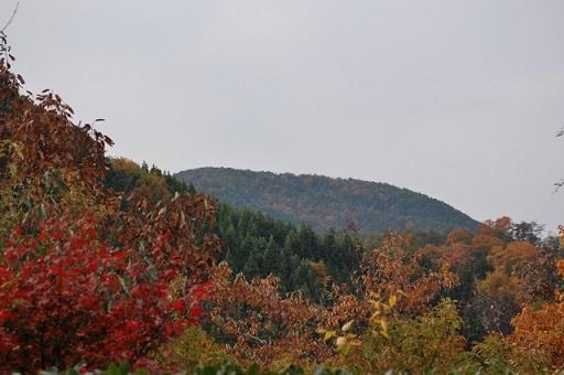 kyotokouyo3.jpg