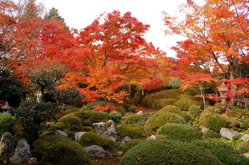 kyotokouyo5.jpg